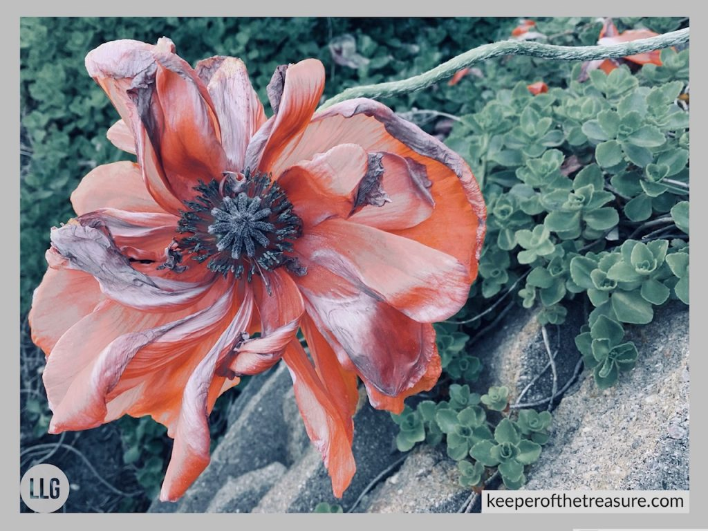 poppy image transitions by LLGriffin